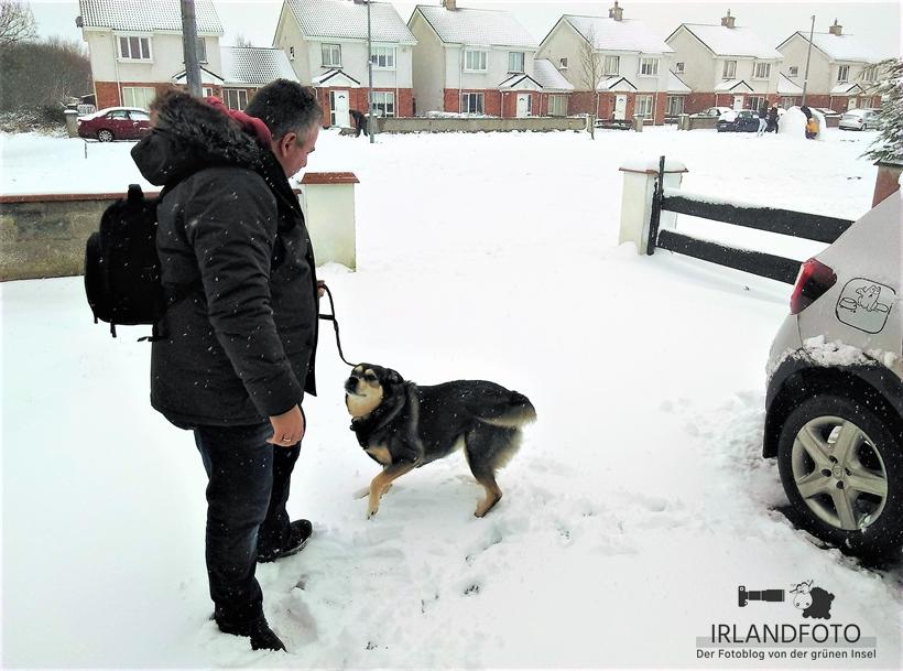 Bailey im Schnee