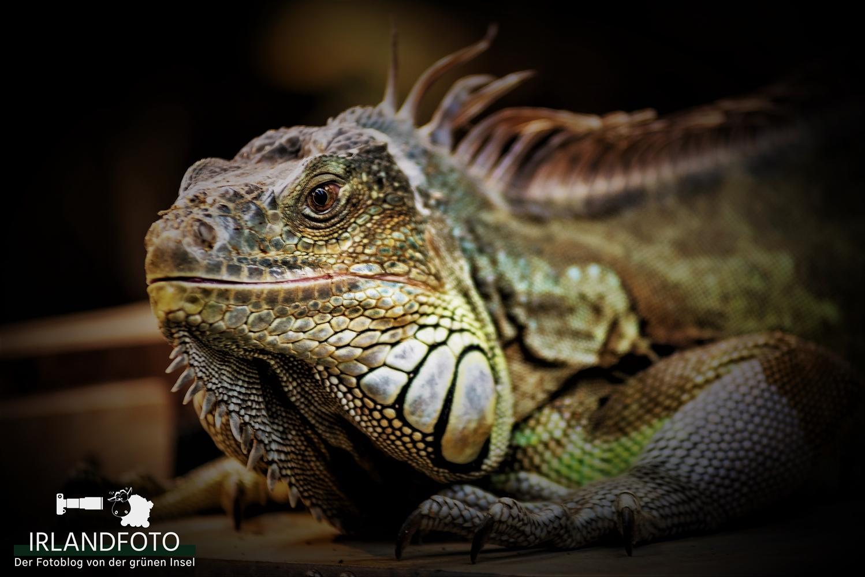 Reptil im Fota Wildlife-Park