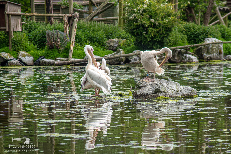 Fota Wildlife-Park