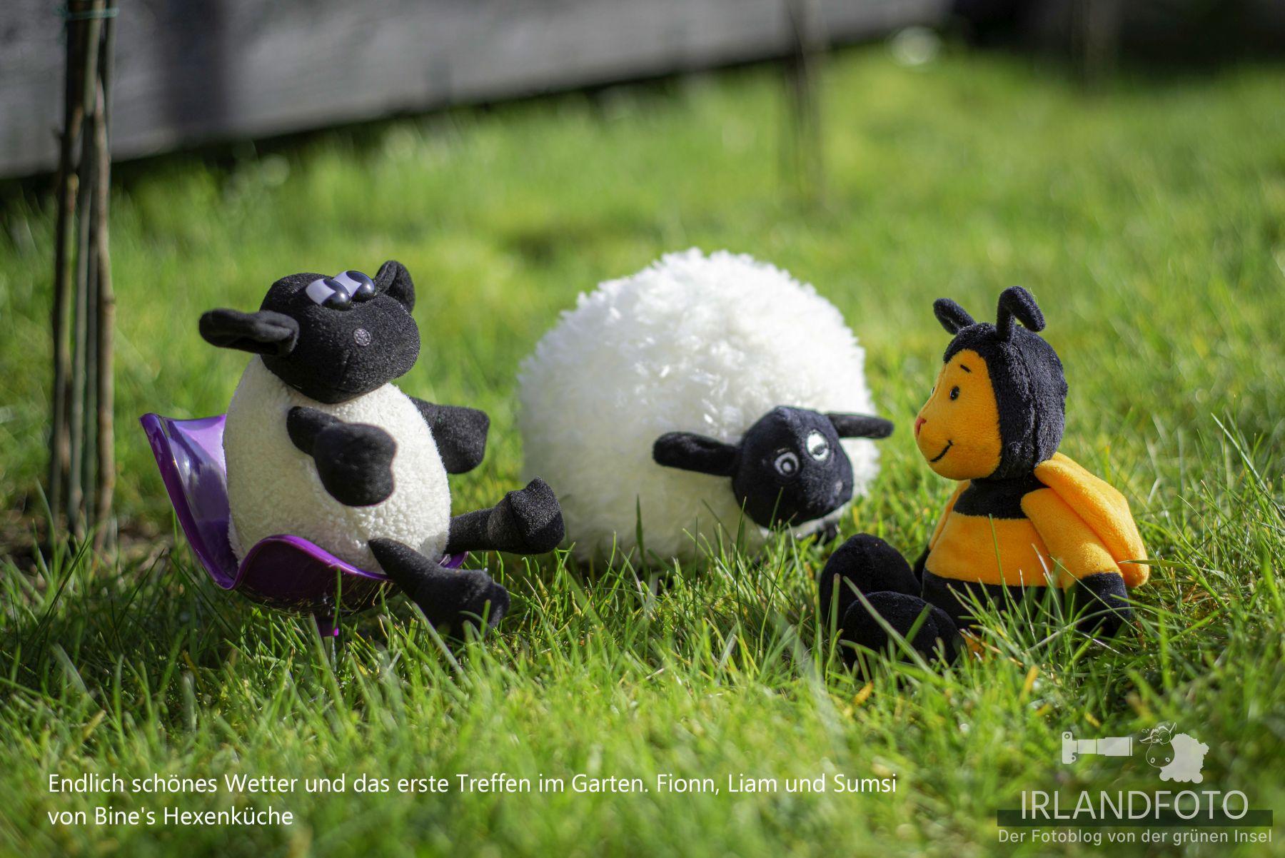 Fionn mit Freunden - Irlandfoto.com