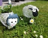 Schafe im Garten