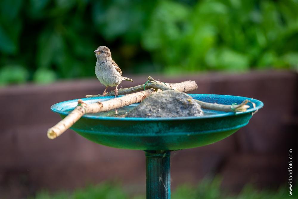 Vogelbad im Garten