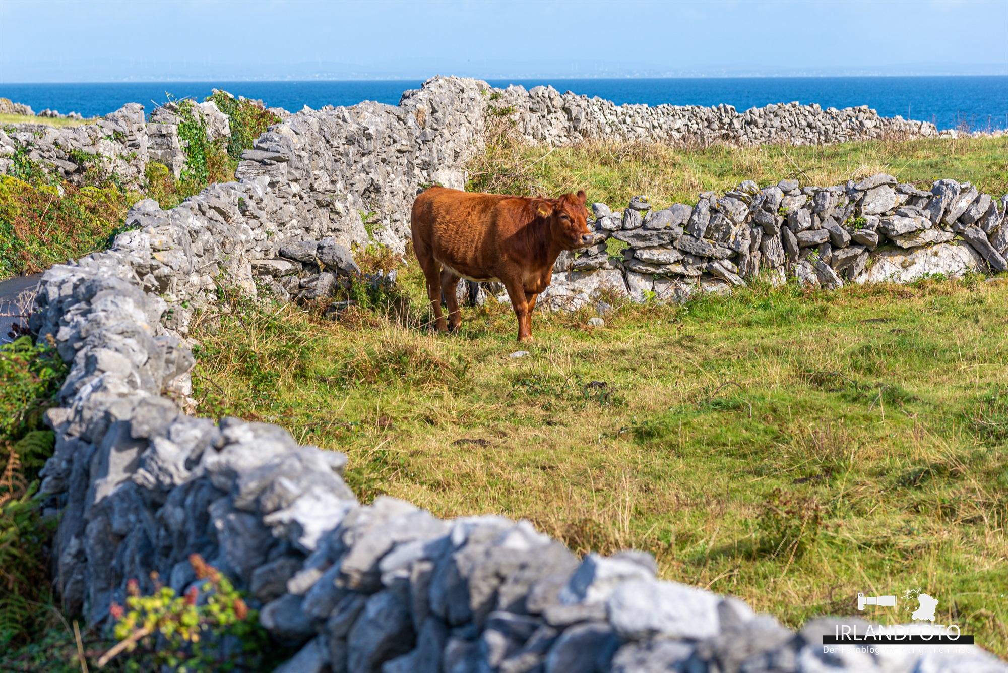 Inisheer, Aran-Inseln, Co. Galway